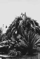 nevada (7)